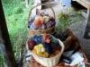 taste-the-wild-sept-2011-019-640x360